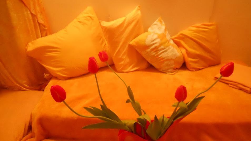 Jerusalem Tulip Center Tulip Love